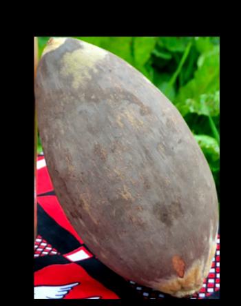 Photo du fruit du baobab